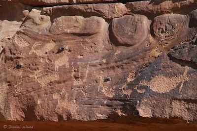 Petroglyphs of sheep